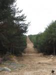 IDForestal Selvicultura Preventiva