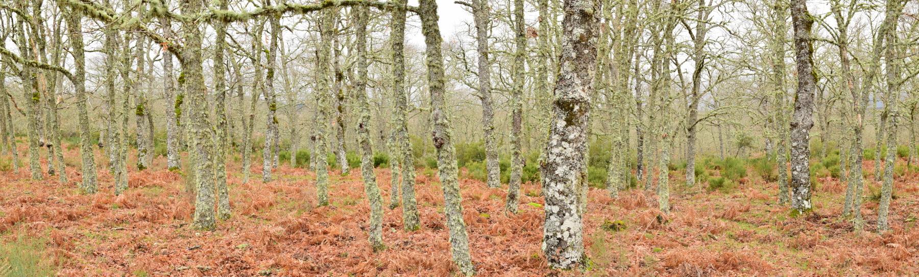 IDForestal Ingeniería Forestal