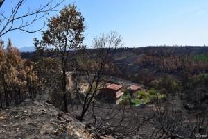 IDForestal ¿La Extracción de Biomasa Reduciría los Incendios Forestales?