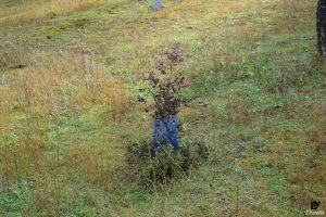 IDForestal Reforestación Castilla-La Mancha