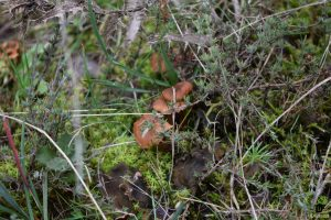 IDForestal Aprovechamiento Micologico