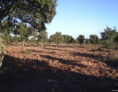 Ayudas de Reforestación y Creación de Superficies Forestales (convocatoria 2018)