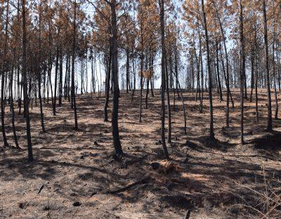 2017… Incendios Forestales