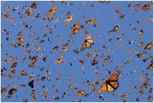 Insectos & Biomasa