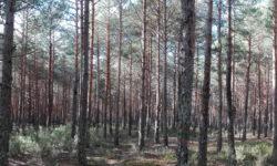 IDForestal.-¿Qué Pueden Hacer los Bosques por las Ciudades?